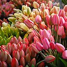 Farmer's Market Tulips by nwexposure