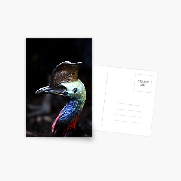 Cassowary Postcard