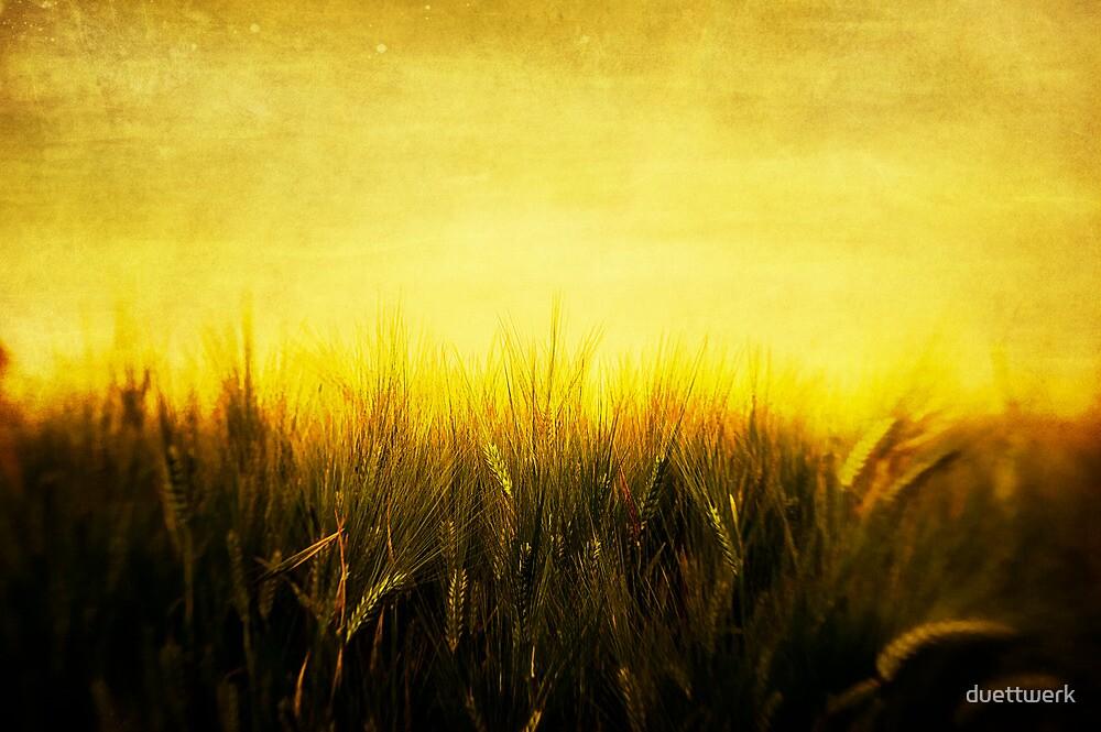 burning wheat by duettwerk