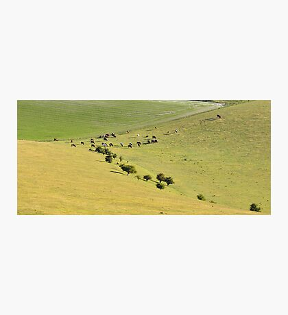 Golden meadow of Moo Photographic Print