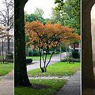 Little Tree... Seasons Change - triptych by steppeland