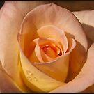 Princess Rose by Diana Nault