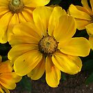 Mellow Yellow by ArtBee