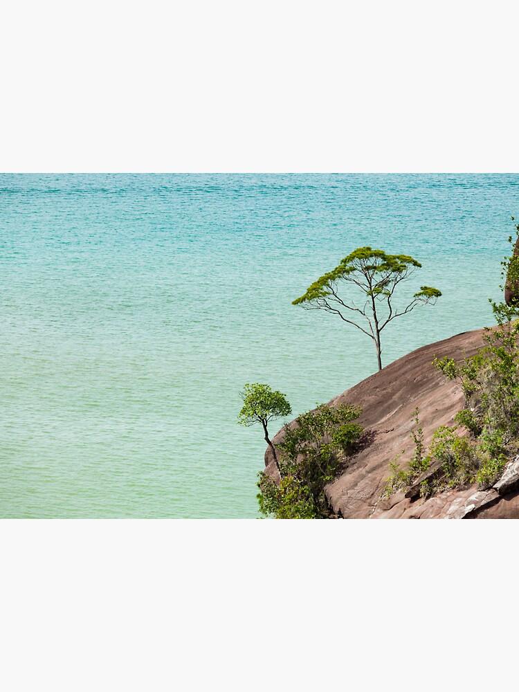 Small tree and big vast ocean scenery by Juhku