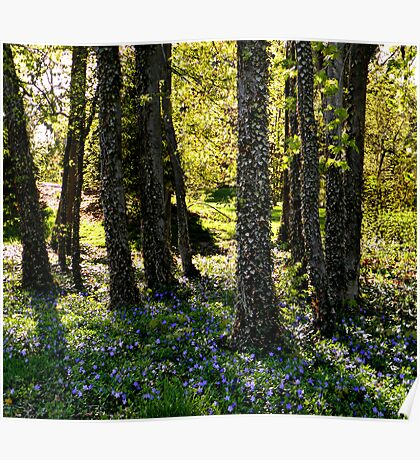 Forest of Wonder Poster