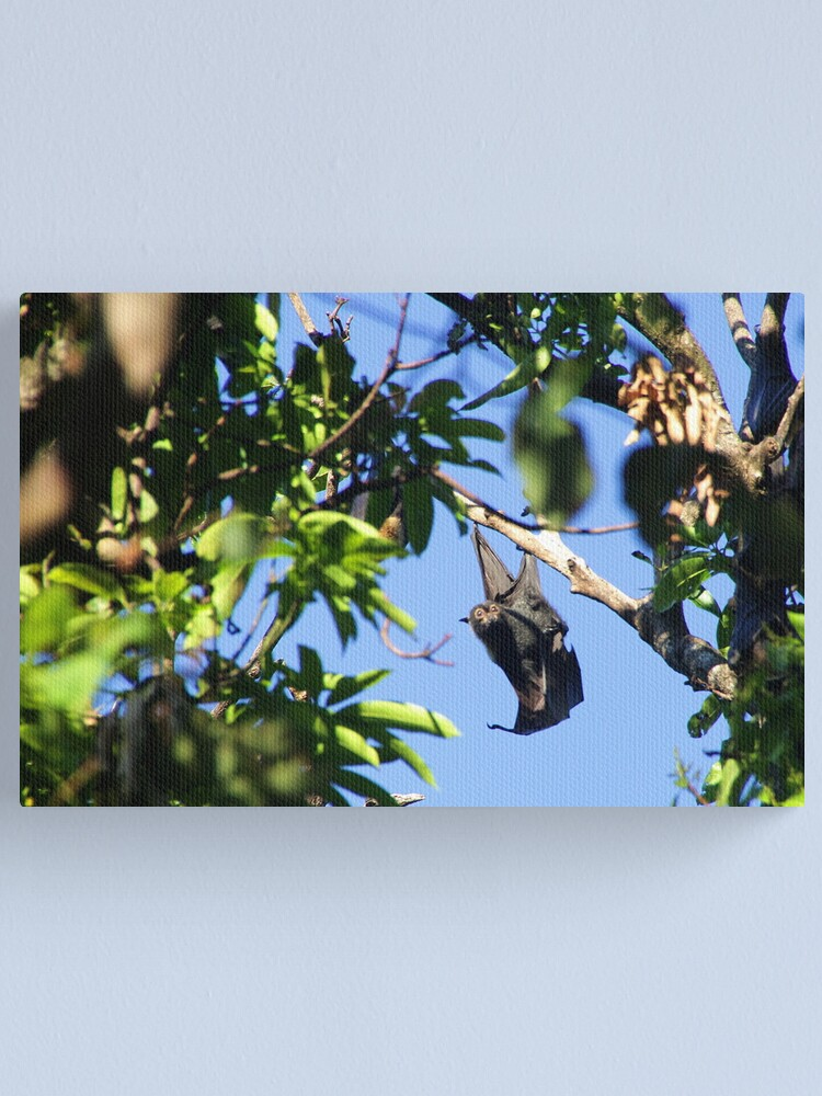 Alternate view of Spectacled Flying Fox Canvas Print