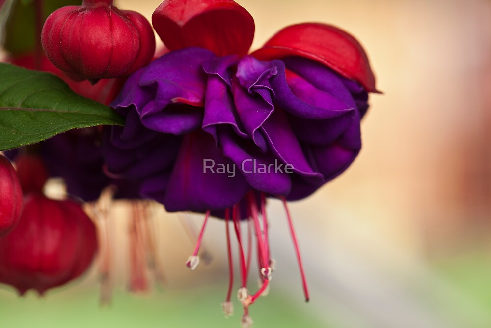 First of the Year by Ray Clarke