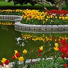 Tulip Time in Turkey by Peter Hammer