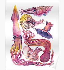Cephalopods Poster