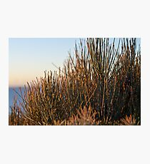 Shrubs Photographic Print