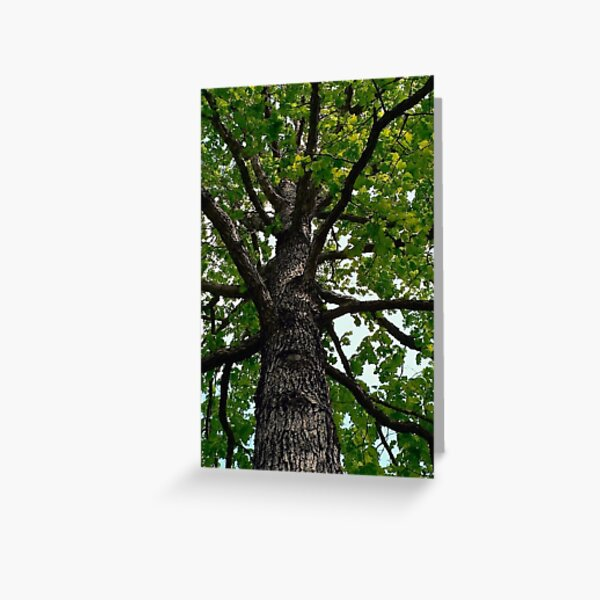 The Oak Tree,   A Poem Greeting Card