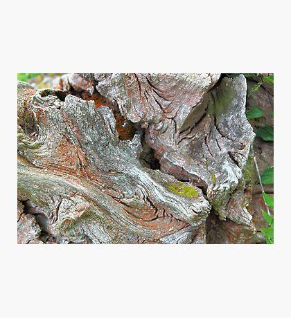 Red Ironwood Photographic Print
