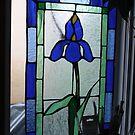 BLUE FLAG IRIS STAINGLASS by eoconnor