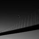 Icarus by Daniel Hachmann