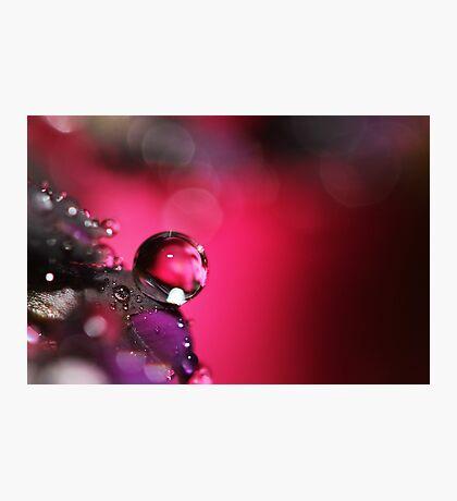 Single Lady Photographic Print