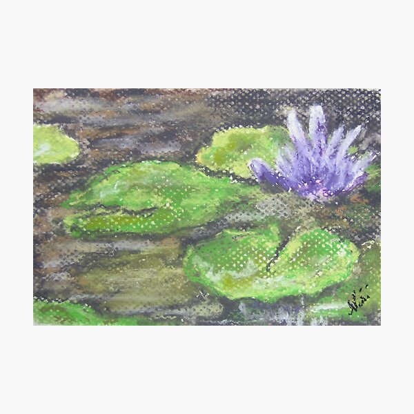 Lotus (pastel) Photographic Print
