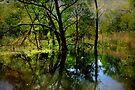Wetlands  by Elaine Manley