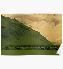 Running Horses Iceland Poster