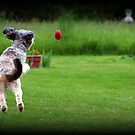 Jump & Fetch by Angie O'Connor