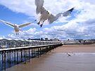 Soaring Seagulls by hjaynefoster