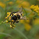 Worker Bee by Scott Mitchell