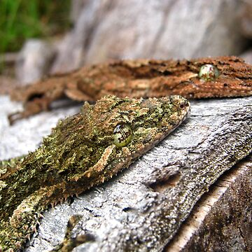 Faces of Leaf-Tailed Geckoes by ravenmadd