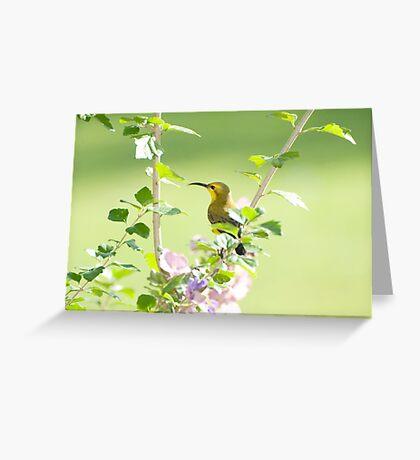 Mummy sunbird  Greeting Card