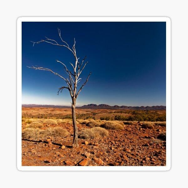 Lone Tree Sticker