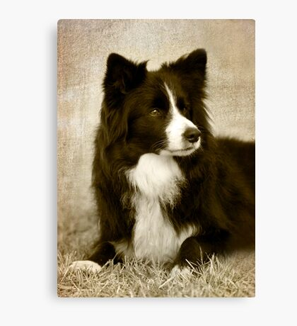 Soccer Dog 2 - border collie Canvas Print