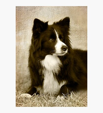 Soccer Dog 2 - border collie Photographic Print
