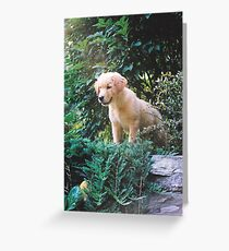 King of all beast's, or just a poser? Greeting Card