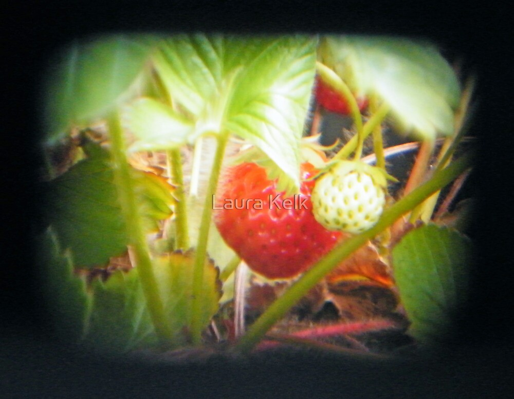 TTV Strawberries (a first attempt) by Laura Kelk