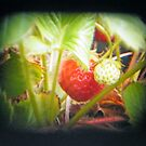 TTV Strawberries (a first attempt) by Laura Kelk