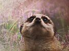 Meerkat Dream by Carol Bleasdale
