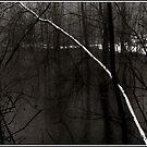 Birch in an Alder Swamp by Wayne King