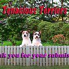 Tenacious Terriers by BrightBrownEyes