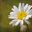 Happy Flower by Linda Trine