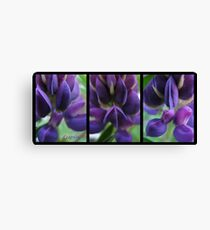 Lupin love Canvas Print