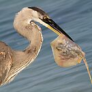Catch of the day from another angle! by jozi1