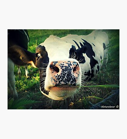 Here! I Want To Ask You Something!  - No 1 Photographic Print