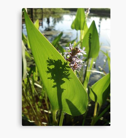 Pickerel Weed and Shadows Canvas Print