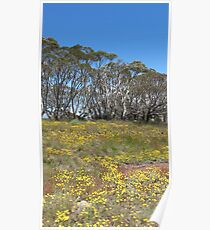 alpine flowers Poster