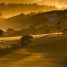 Symphony of Light by Ian Stevenson