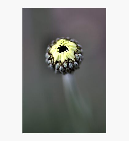 Young Bud - African Eyes Photographic Print