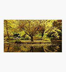 Alfred Nicholas Gardens Photographic Print