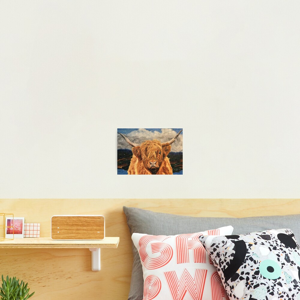 Highland Cow in Early Snow - Wall Art Photographic Print