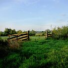 Meadow gate in morning light  by steppeland