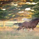 Like The Wind by Jessica Hooper