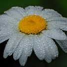 Yellow, white and rain drops by Antanas