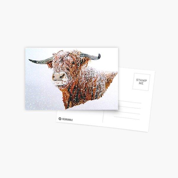 Snowy Highland Cow in Falling Snow Postcard Postcard
